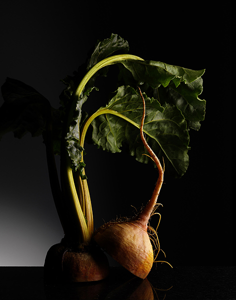 gold_beets_042.jpg