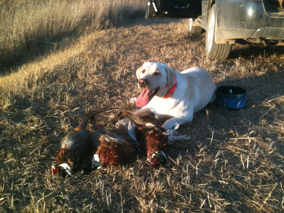 Mike's proud pup, Rufus with his roosters.