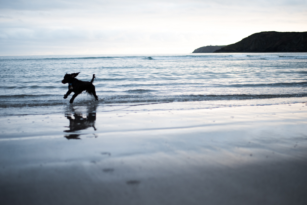 Dog on Kennack Sands - Olivia Bossert Photography