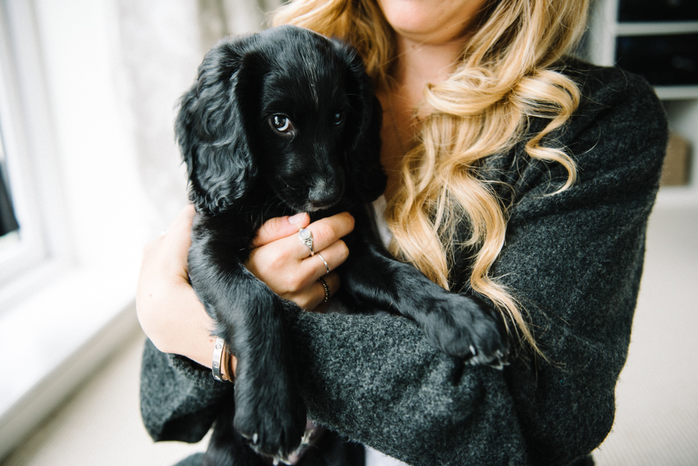 Life Update | A Puppy Parent Life // www.oliviabossert.com // working cocker spaniel, puppy, dog, puppy parent, getting a puppy, cornwall