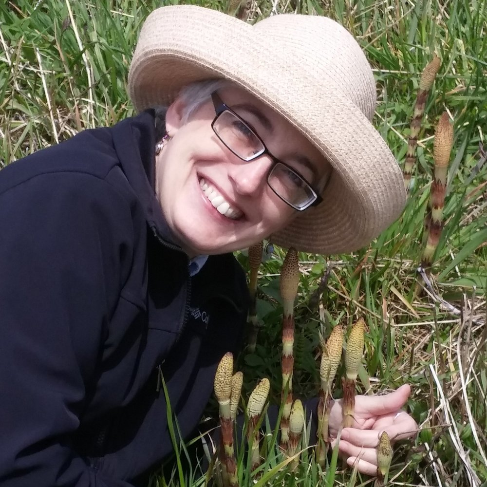 Dr. Melanie Link-Pérez, the 2018 ASPT Engagement and Excellence in Plant Systematics Education awardee, admires a healthy patch of  Equisetum .