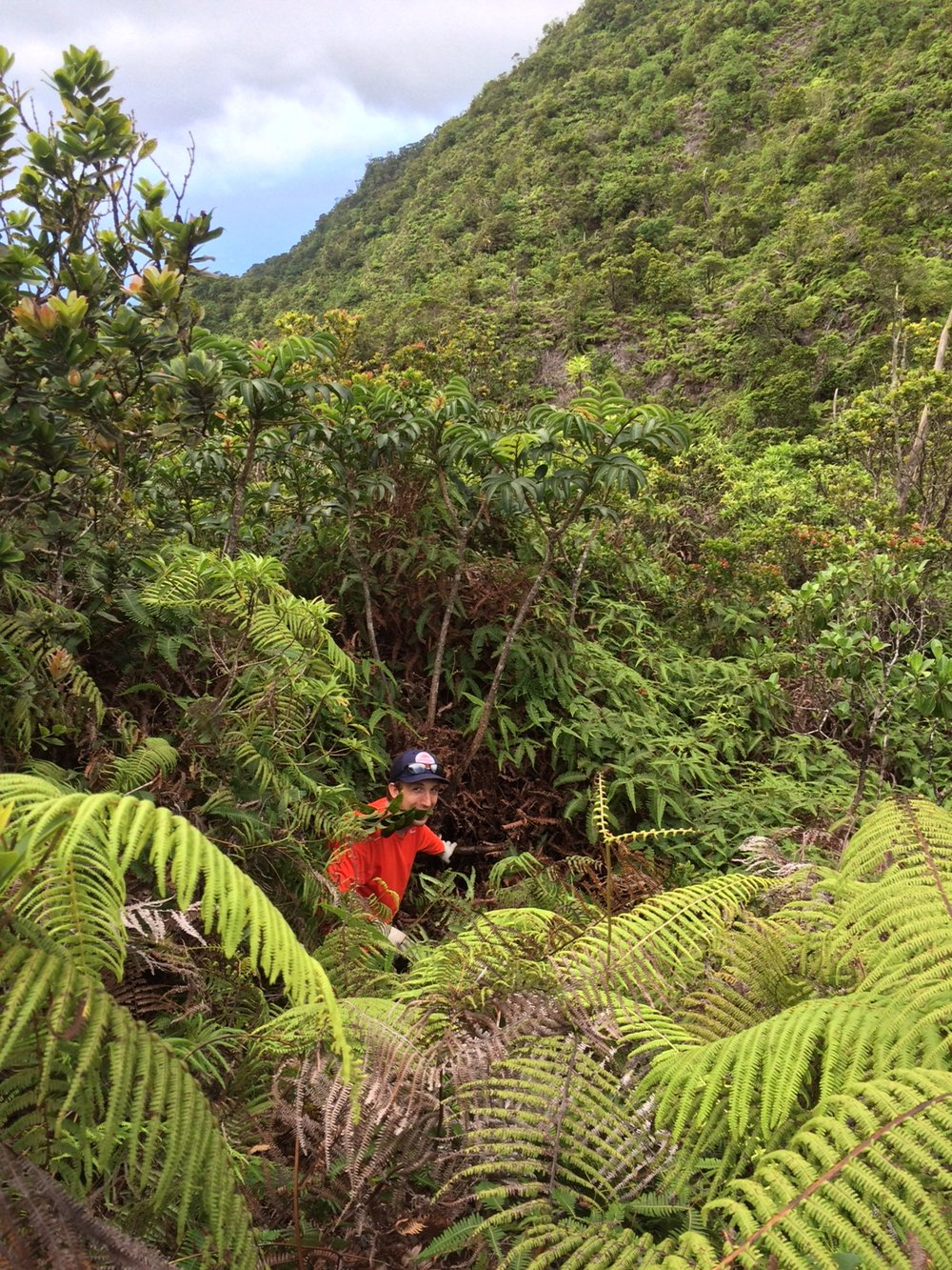 Jesse Adams   Systematics of three endemic and one widespread species of  Polyscias  (Araliaceae) from Kaua'i