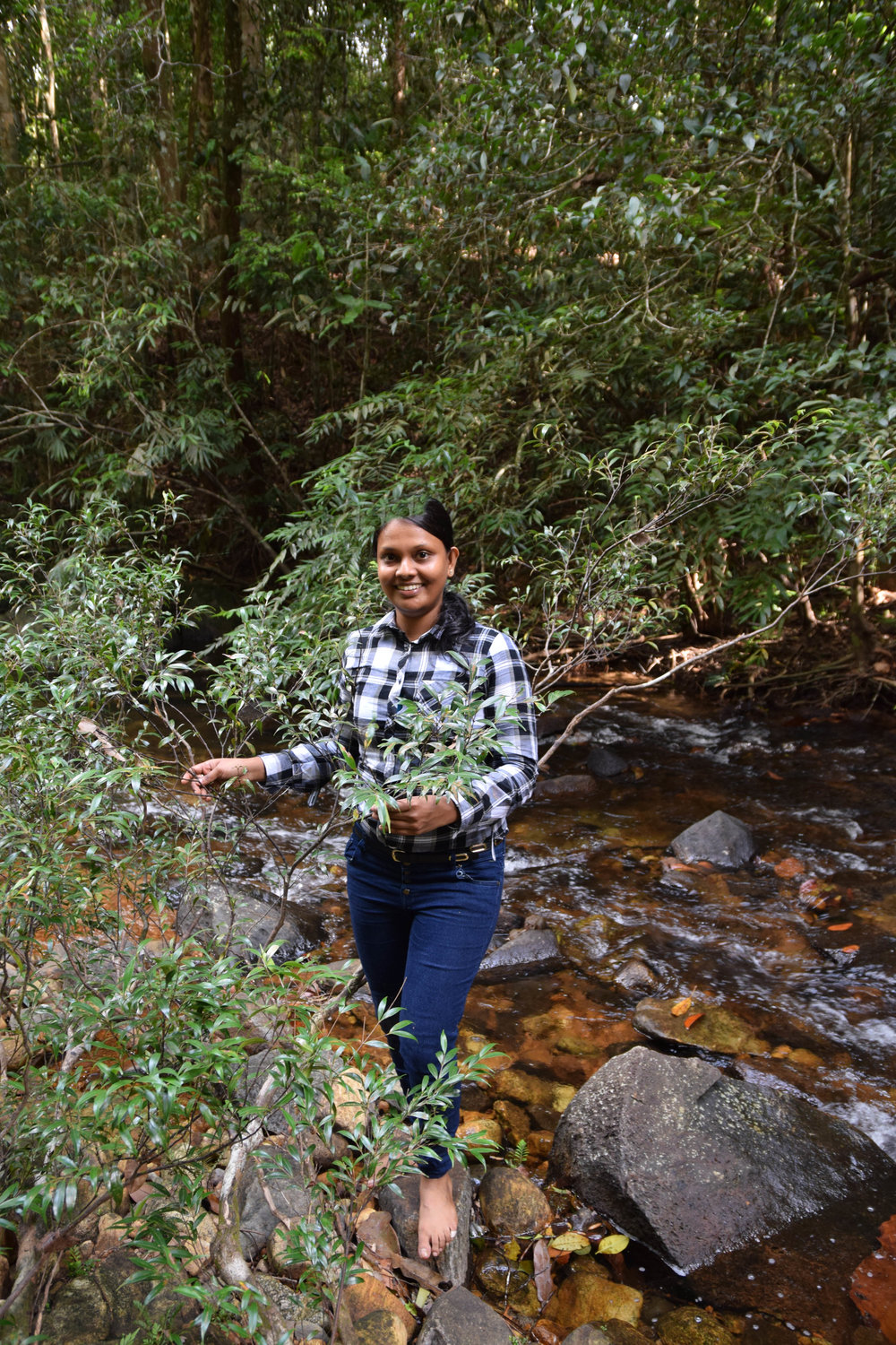 Prabha Amarasinghe   An integrated approach for understanding the drivers of diversification in  Memecylon  (Melastomataceae)
