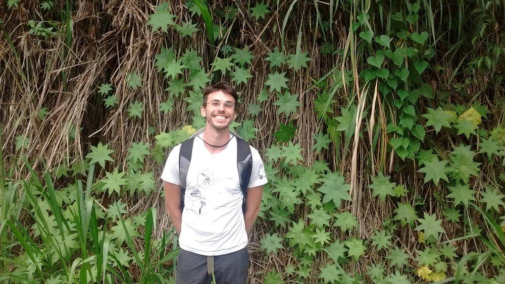 Eduardo Nery   An integrative taxonomic approach to the Neotropical complex  Hydrocotyle quinqueloba  Ruiz & Pav. (Araliaceae)