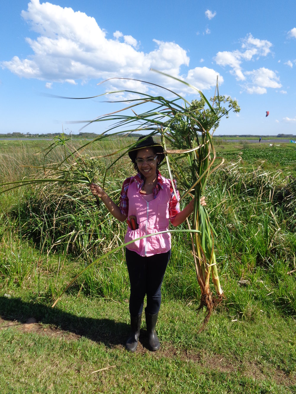 Luciana Pereira da Silva   Universidade Federal de Santa Catarina  Ph.D. project: Integrative studies on the diverse genus  Cyperus s.l.  (Cyperaceae): diversity in Central Brazil, molecular phylogeny, and lineage diversification