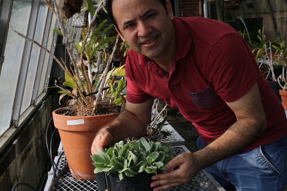 Ramhari Thapa   University of Memphis  Ph.D. project: The Development and Use of Microsatellite Markers for Understanding Parental Origins in Complex Polyploid Species ( Antennaria rosea ; Asteraceae)