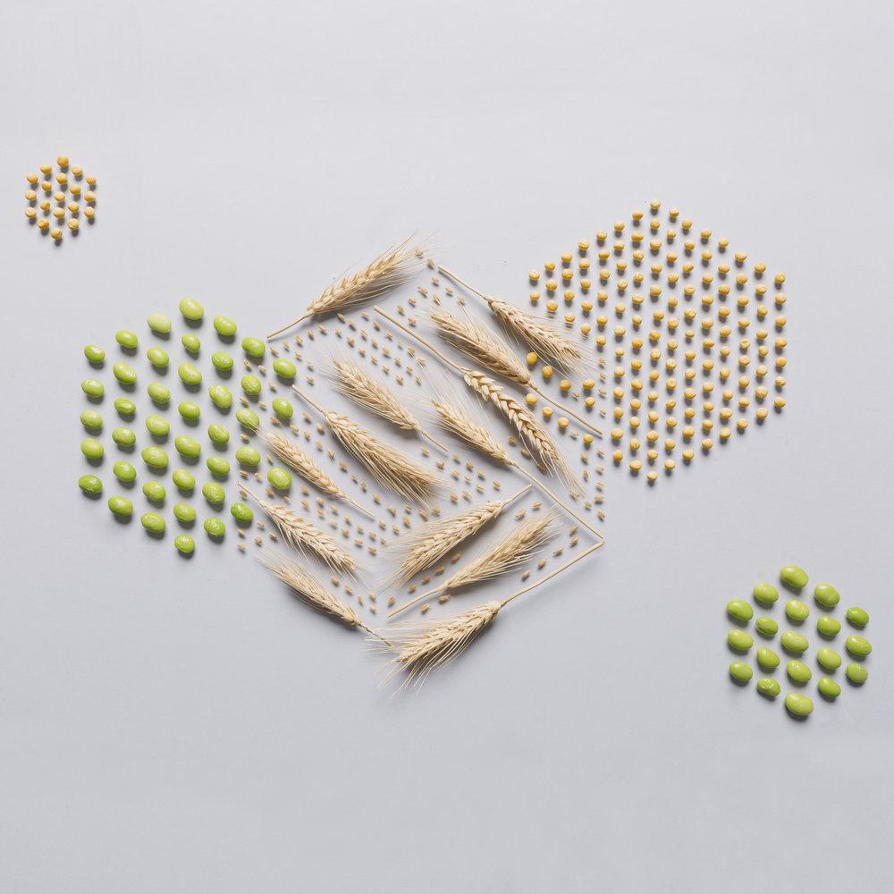 Nut_Deconstruct_Protein_Hex_02.jpg