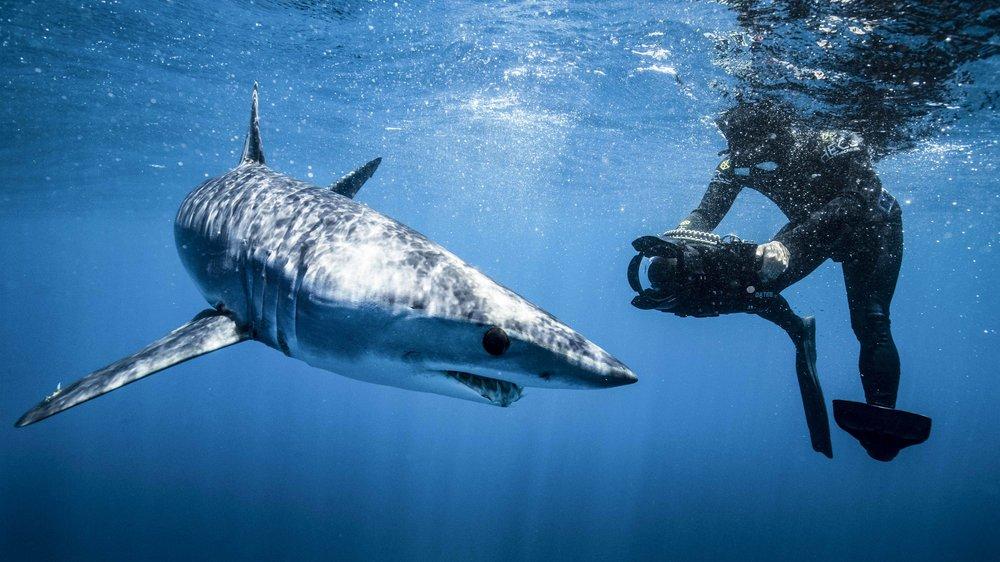 filipe and a shark.jpg