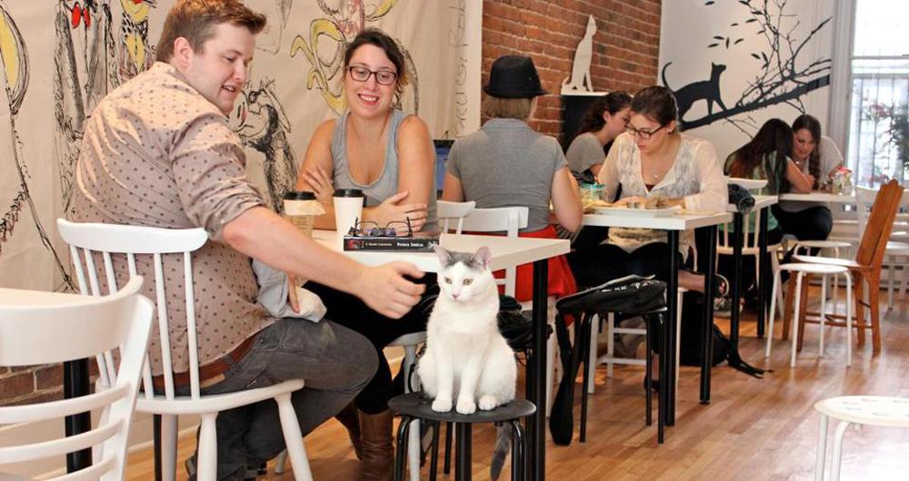 Een voorbeeld van een kattencafé in Boston.