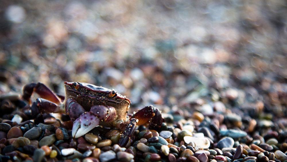 cool crab.jpg