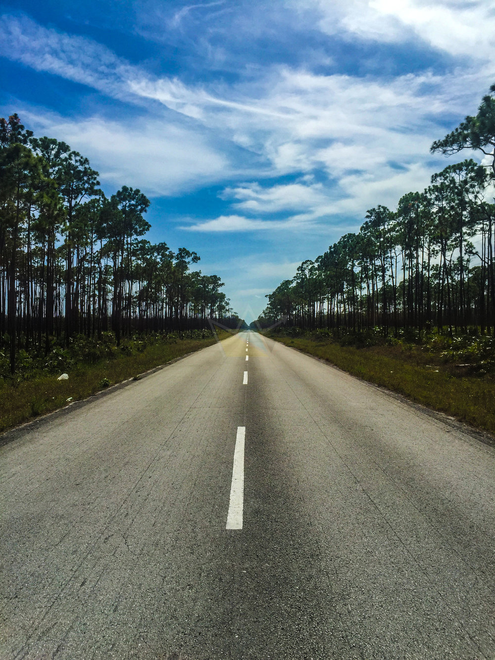Grand Bahama Highway & Pine Forests