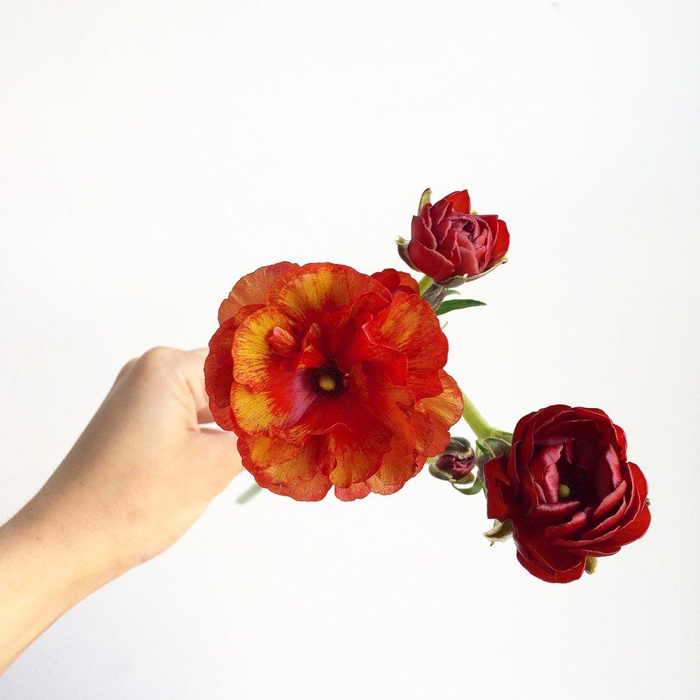 TEXTURE Florals | Spring Flowers