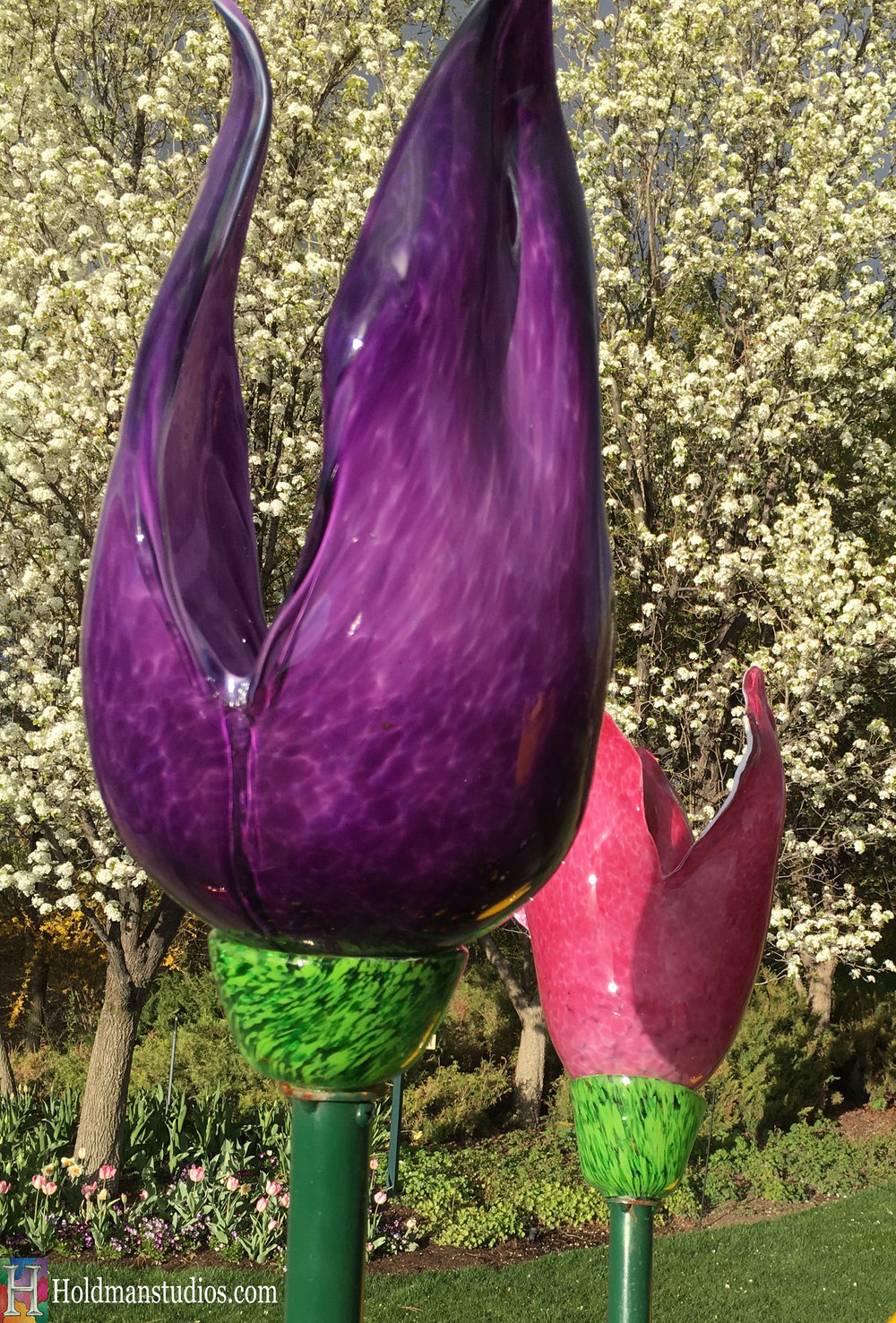 Blown Glass_Ashton Garden Tulips 7.jpg