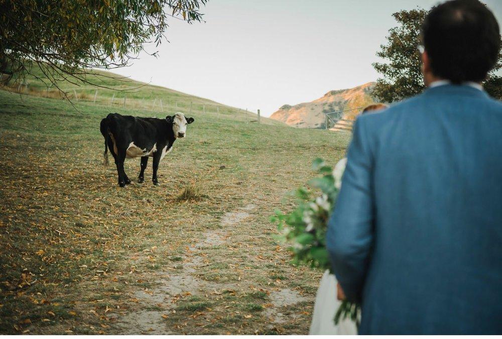 Kaituna Valley Wedding Photographer 036.jpg
