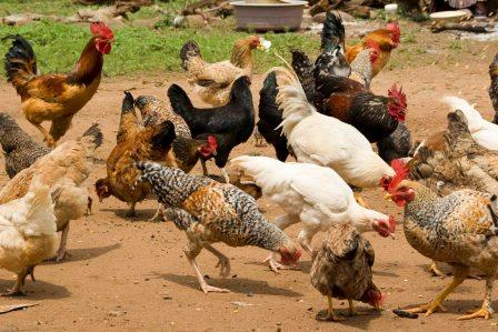 <strong>The Poultry Farm</strong><p>Learn more »</p>