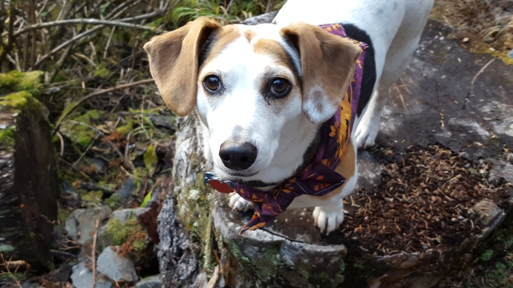 Jane Belovarac - Secretary/Treasurer    I have been a participating member of SOS pets since 2010.   I am a Veterinary Technician at the Alaska SeaLife Center.  Enjoy the photo of my dog Molly!