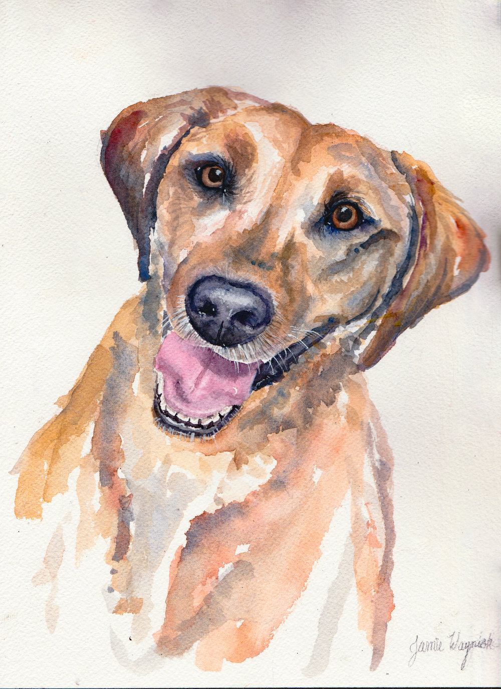 dog portrait 1.jpg