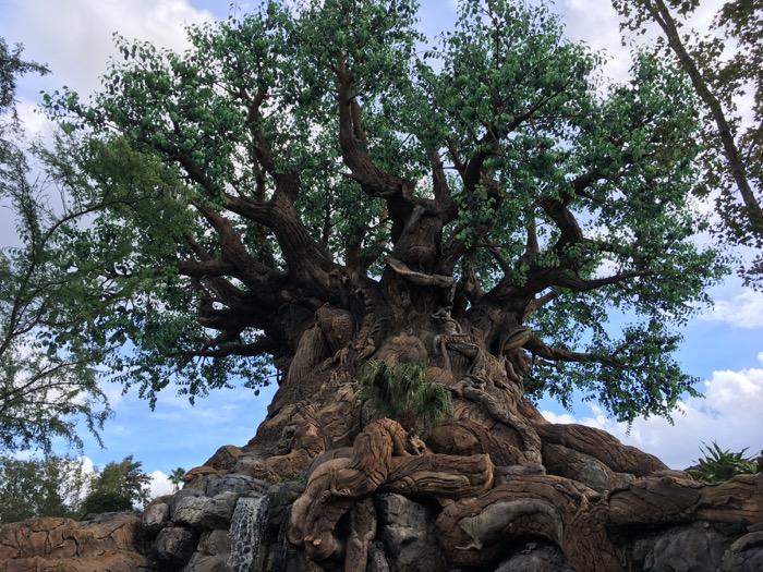 dak tree.jpg