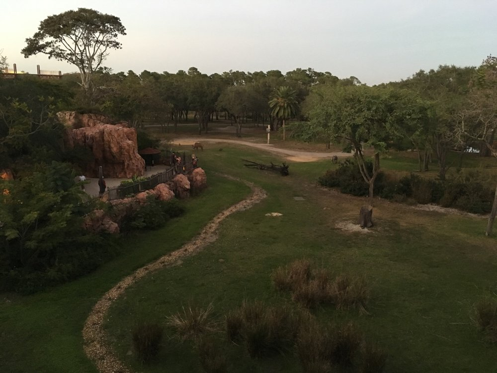 All Club Level rooms at Animal Kingdom Lodge are Savannah View!