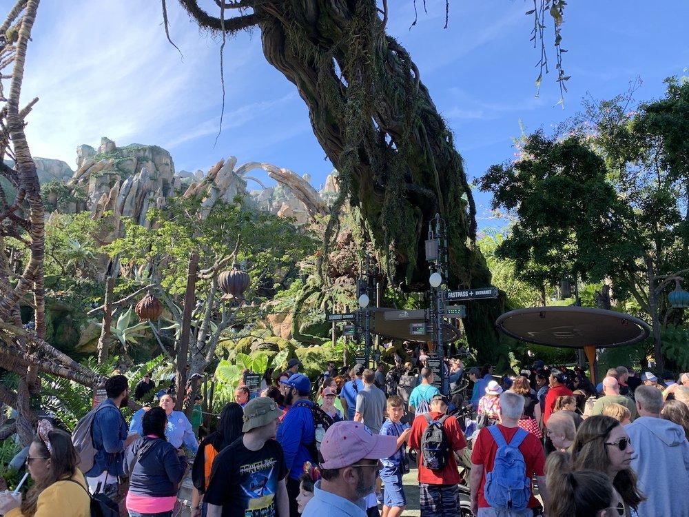 hollywood studios animal kingdom park hopping dak crowd.jpeg