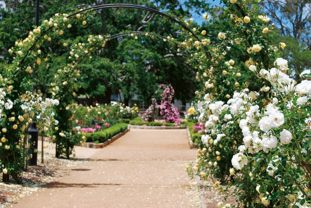 The Queensland State Rose Garden Houses A Large Collection Of Rose  Varieties. The Rose Gardens Began With Multiple Plantings Of Hybrid Tea And  Floribunda ...