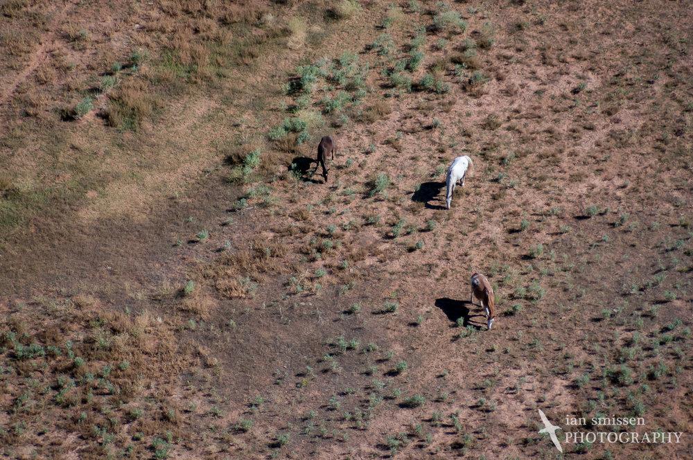 Wild Horses at Canyon de Chelly