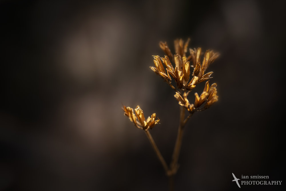 90mm Macro lens, ISO 100, 1/200 second @ f/5.6