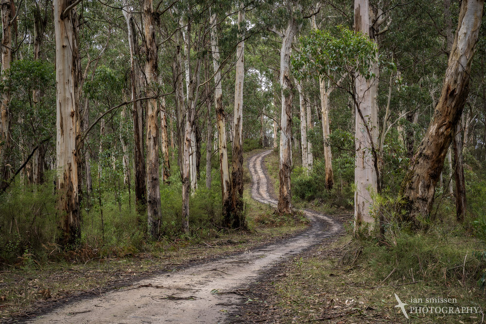 Big Hill Track, Great Otway National Park, Victoria, Australia 55mm, ISO 200, 5-shot HDR: 1/30 to 1/2 second @ f/11