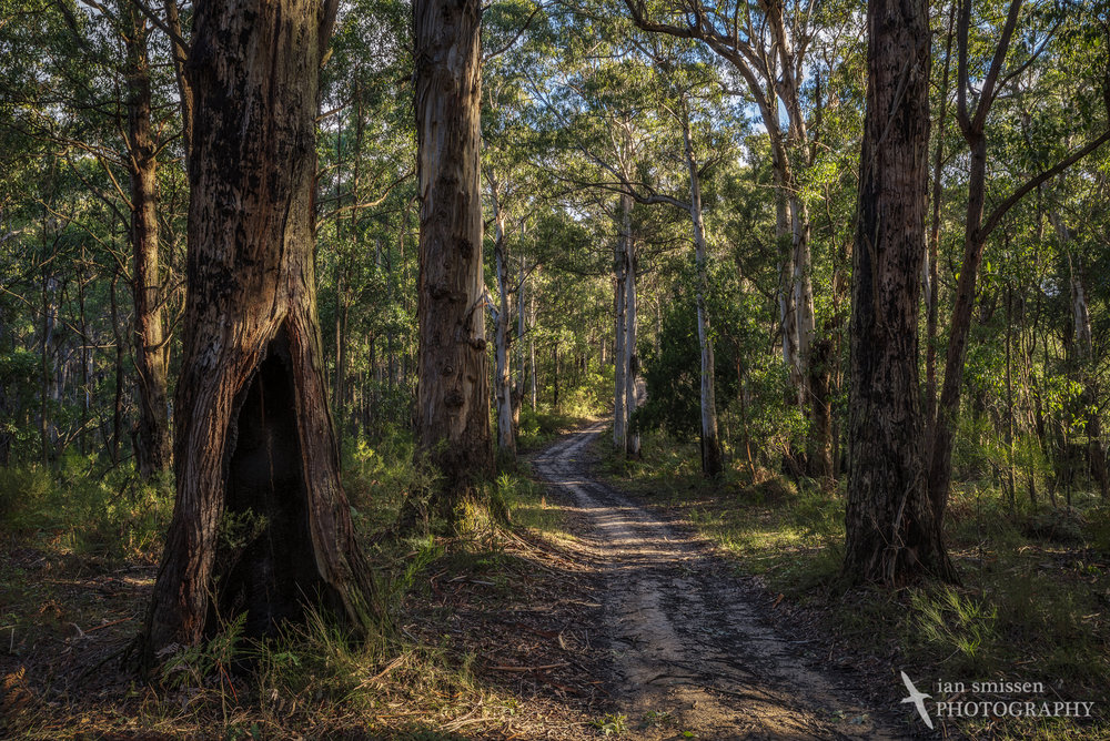 Big Hill Track, Great Otway National Park, Victoria, Australia 29mm, ISO 100, 7-shot HDR: 1/5 to 6 seconds @ f/16