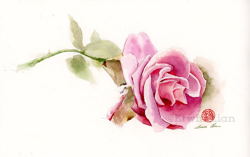 Red Rose, Transparent Watercolor