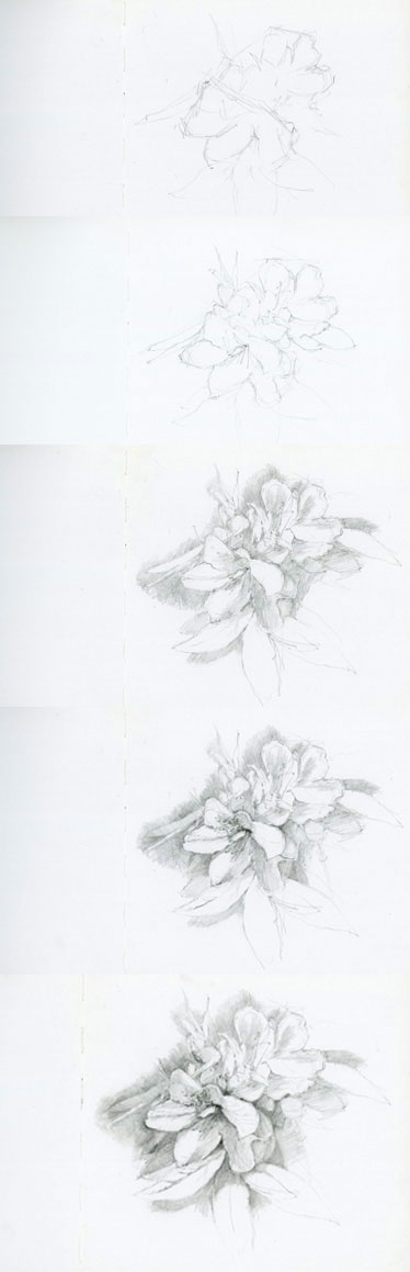 botanical_sketch.jpg