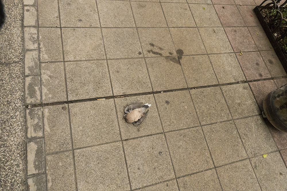 Saw a dead bird when I cycle back to Taipei Main Station.