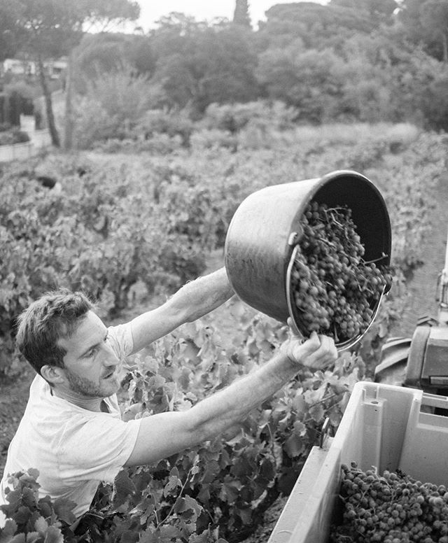 Hard work comes to fruition. Get ready to taste the 2017 vintage. . . .📸 @camillemcouat  #harvest2017 #maisonangelvin #roséseason #rosélifestyle #cotesdeprovence #sttropez #sainttropez #thisissttropez #frenchriviera #golfesttropez  #summerwater #winemoment #wineoclock #winelife #winemaking