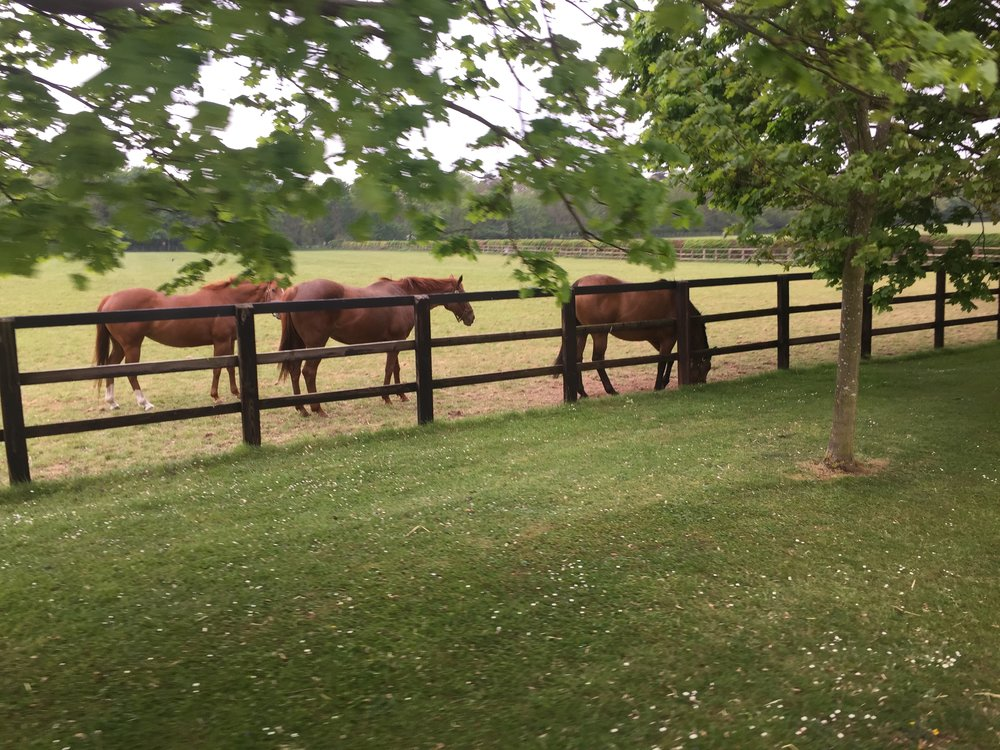 Meeting the mares at the stud
