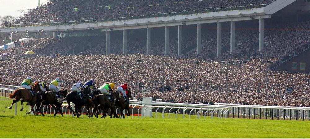 horses-racing-grandstand hero.jpg