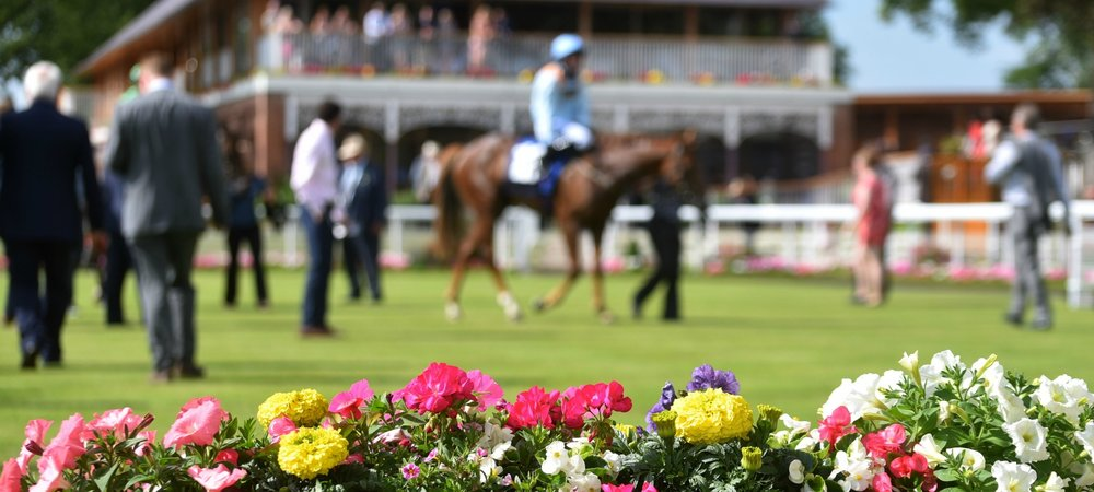 york-paddock-flower-blur-hero.jpg