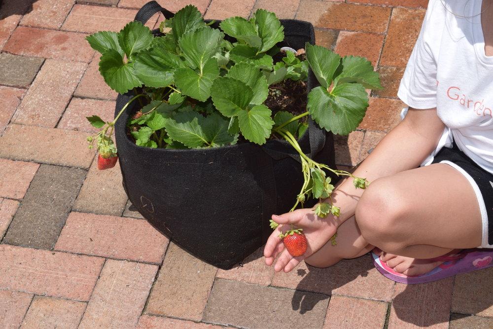 Gardenuity 5-26-18 037.JPG