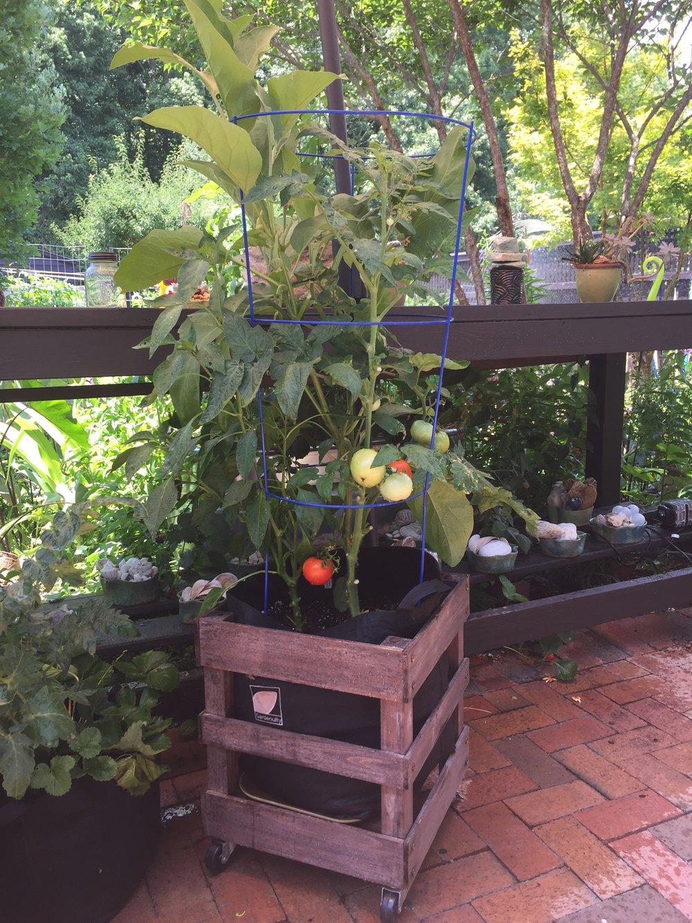 gardenuity June.jpg