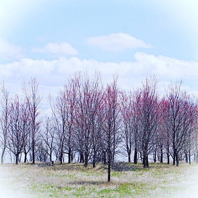 April's Promise - Maffitt Reservior