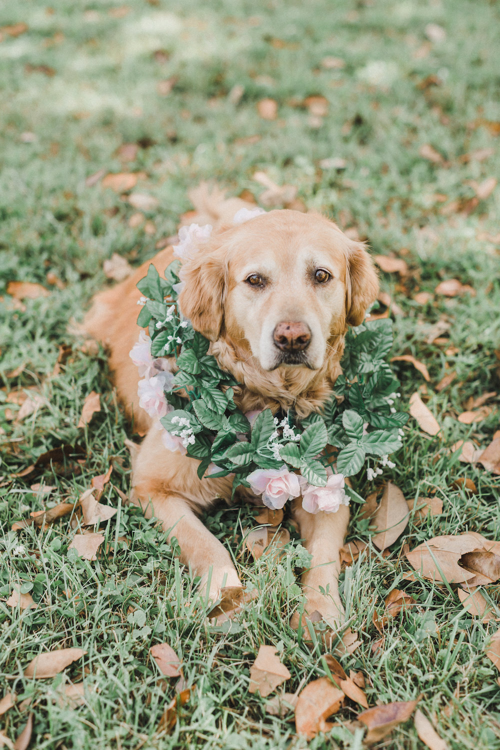 dog-ring-bearer-third-clover-paper-annamarie-akins-photography.jpg