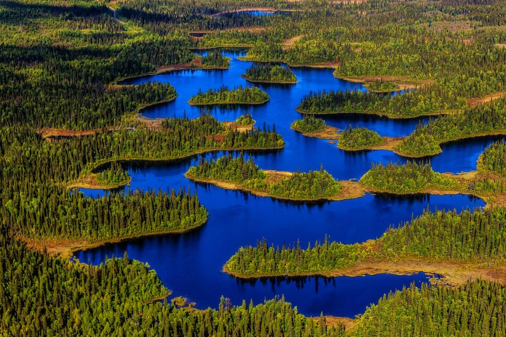 It is typically Scandinavian to have    DEEP FORESTS    SWEDEN INLAND