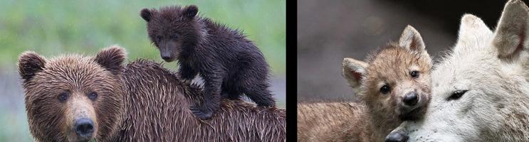 bearbabies.png