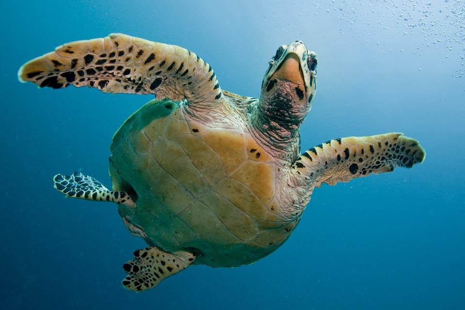 turtle-2250720_960_720.jpg