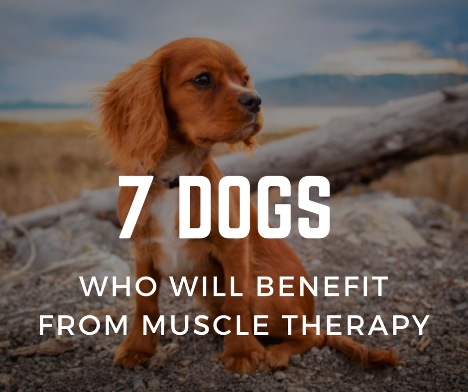 7 Dogs who will benefit from muscle therapy