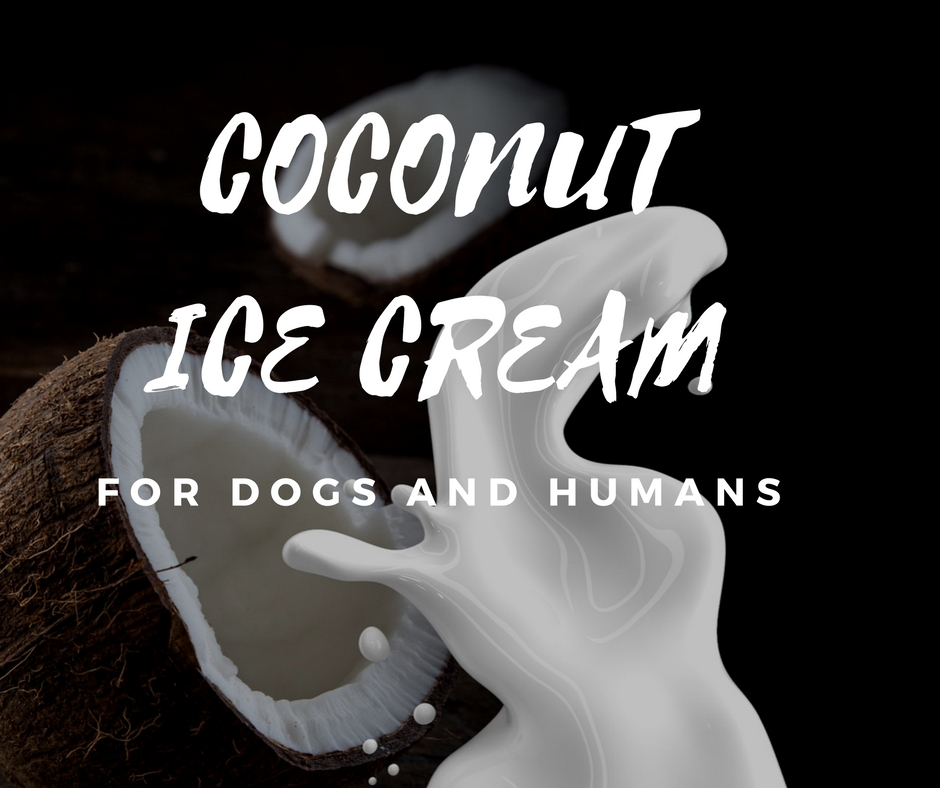 Coconut Ice cream for Dogs and Humans