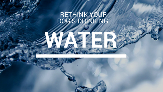Canine_muscleworks_drinking_water_dog.png