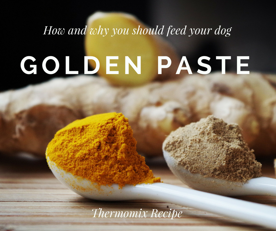 Why feed your dog Golden Paste? Easy thermomix recipe! — CANINE