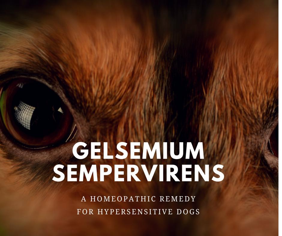 canine_muscleworks_gelsemium