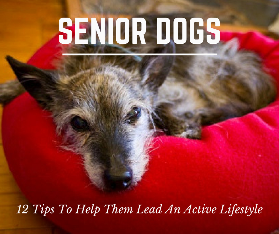 canine_muscleworks_12_tips_seniors