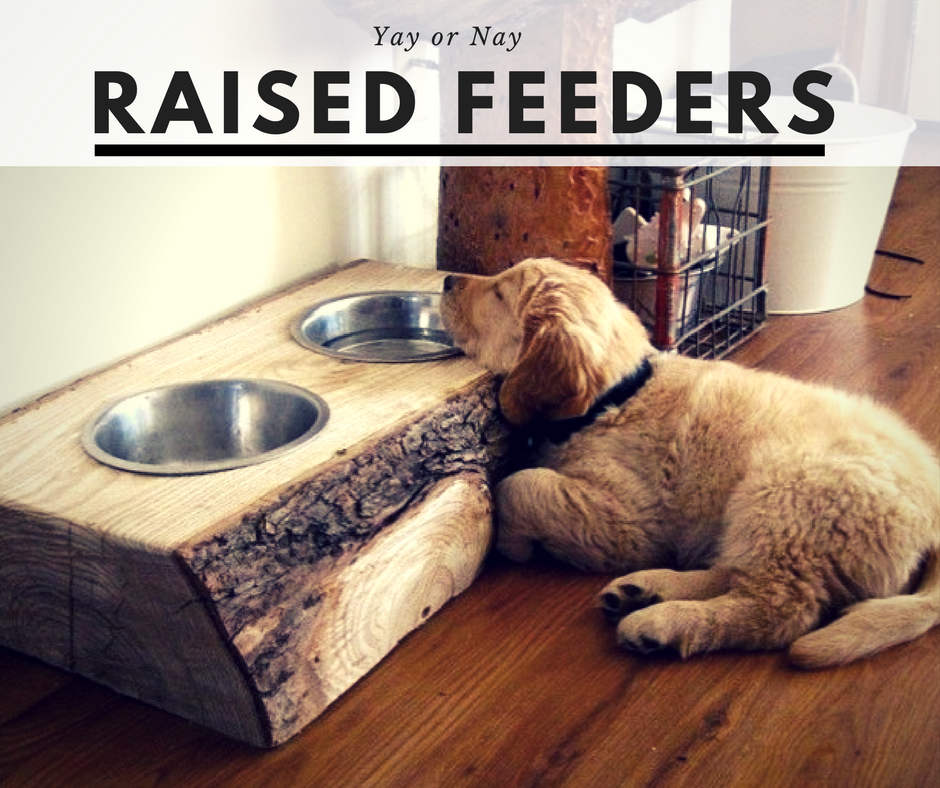 CANINE_MUSCLEWORKS_RAISED_FEEDER